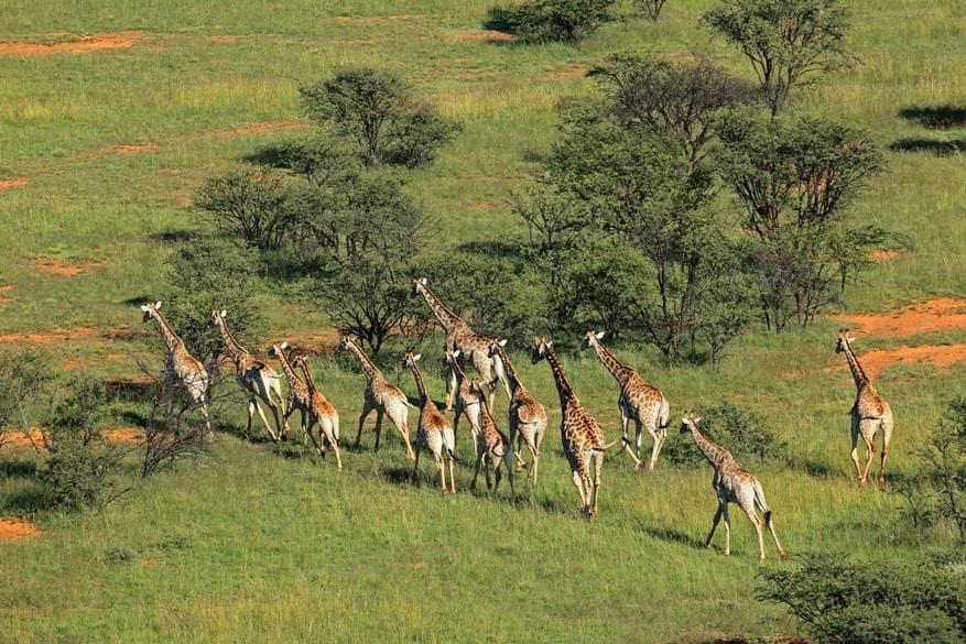 Szafari, Afrika