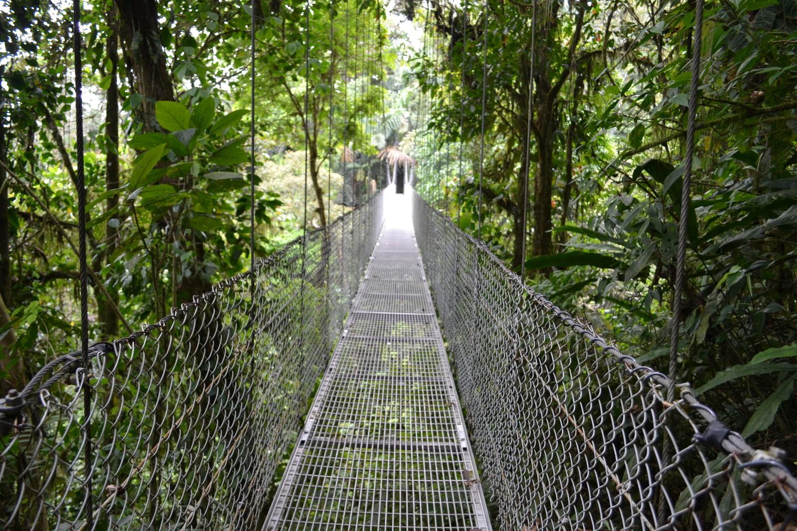 costa-rica_bridge-over-the-trees-1623067-1599x1066_freeimages