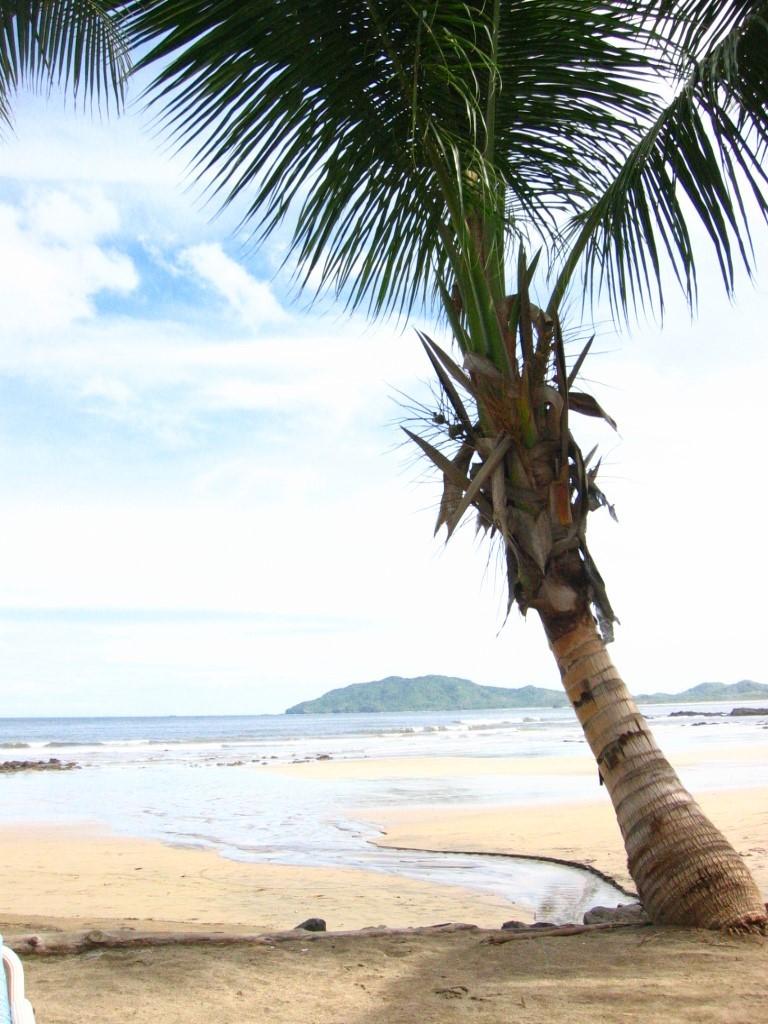 costa-rica_tamarindo-beach-palm-tree-1365708_freeimages