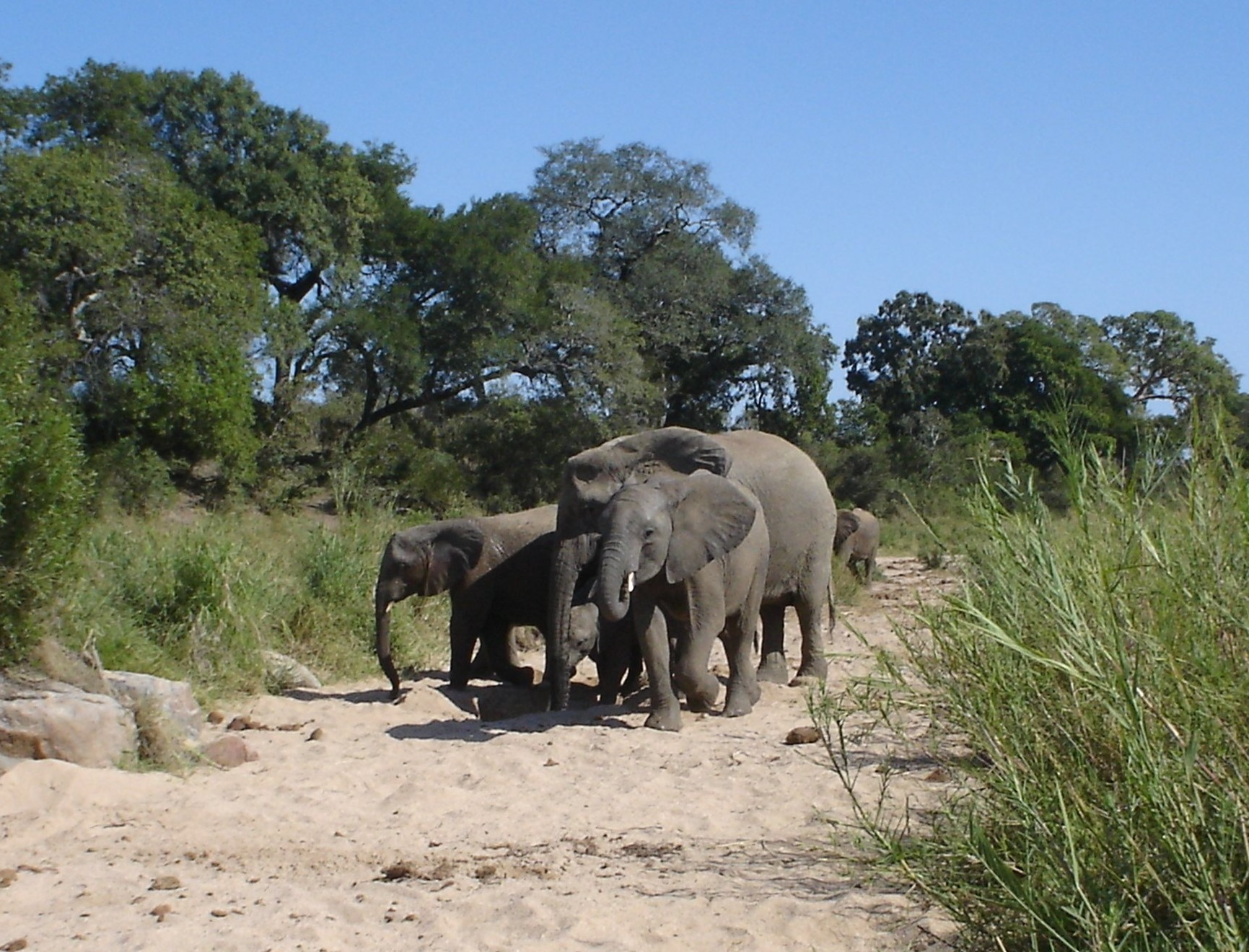 dl-afrika_kruger-national-park-2-1354111